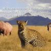 African Wildlife Federation mail