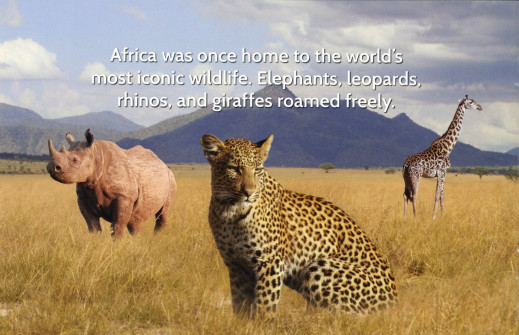 African Wildlife Federation mail