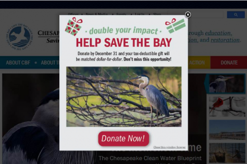 Chesapeake Bay Foundation